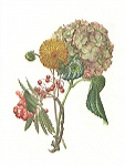 <strong>Bouquet of mixed flowers</strong> |